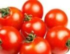 石家庄蔬菜水果配送老字号-老班长蔬菜配送