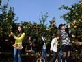 拓展武汉-武汉秋季拓展-秋季拓展周边-秋游带你吃遍周边桔子园