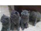 【好消息.好消息】世界名猫登陆大西安.欲购从速.