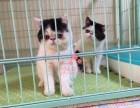 青岛买卖宠物狗地方 青岛哪里卖健康加菲猫价格便宜