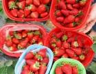 莫辜负了这莓好时光-烟台生态草莓采摘园一日游走起来