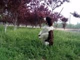 请问北京哪个宠物学校好一些 北京哪个宠物学校好
