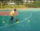 东莞篮球训练营