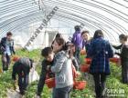 冬季 上海近郊农家乐哪里好玩 采草莓摘桔子钓大鱼 烧烤