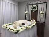 杭州寧波臺州湖州嘉興紹興寵物殯葬火化可上門車接寵物主人可到店
