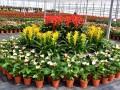 花卉绿植盆栽租赁出售园林绿化养护庭院设计草坪种植假山凉亭