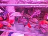 重慶魚缸清洗,魚缸安裝,魚缸維修