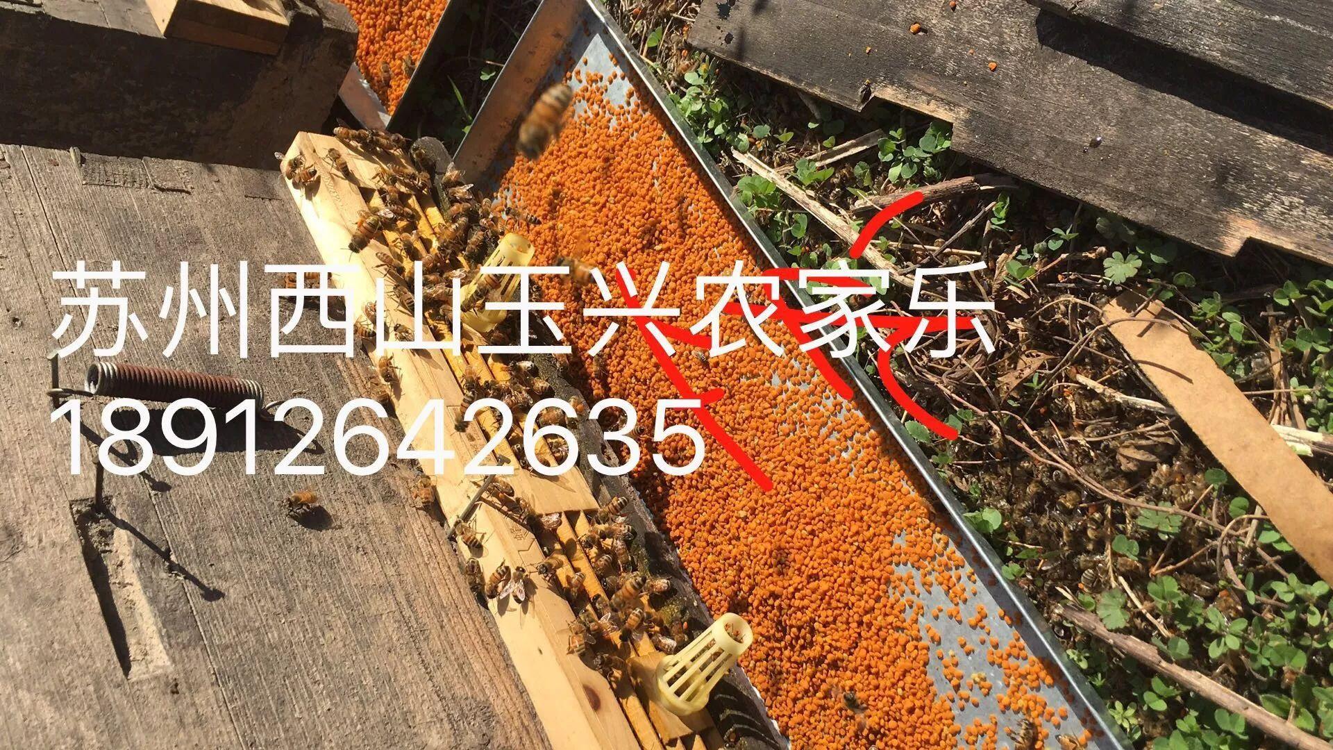 苏州西山玉兴农家乐枇杷蜂蜜.蜂皇浆.枇杷膏.花粉