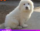 哪里有大白熊出售多少钱,大白熊的照片