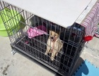 规格1米大狗笼子