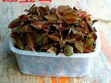 【红宝山】国内最大金线莲生产商 种植6个月以上福建金线莲鲜品