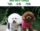 航天宠物托运代办广州深圳长沙上海狗狗猫咪空运航空运输服务好