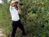 果园农场带成熟果树70亩地出租