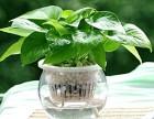 植物租摆是什么?选广州植物租赁公司有什么好?