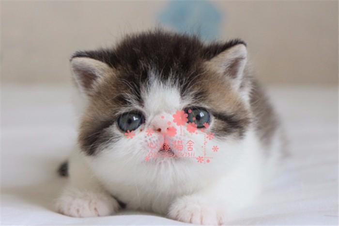 南宁哪里的加菲猫比较便宜健康 南宁什么地方可以买到加菲猫