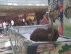 动物杂技出租 百鸟展览马戏团表演