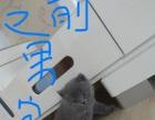 小蓝猫开始预定了...