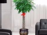上海绿植租摆办公室盆栽租售免费设计方案来电即优惠