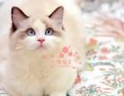 潍坊哪里有卖布偶猫的较便宜多少钱一只