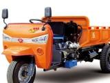 新款五征金锐虎自卸三轮车,自卸三轮货车图片,三轮柴油货车价格