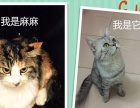 出售三只可爱长毛小猫,刚满月,现接受预定