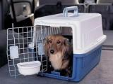 常州宠物托运检疫证办理
