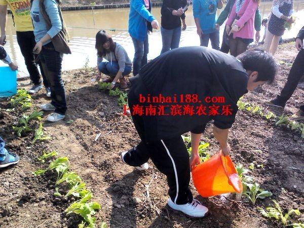 上海农家乐一日游 摘草莓 有机蔬菜 钓鱼 烧烤 团建