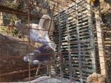 出售各種肉鴿觀賞鴿