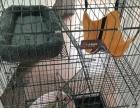 暹罗幼猫全套养猫工具三层猫笼
