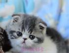 宠物猫咪活体 视频挑选小加菲猫折耳猫英短猫蓝猫波斯