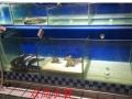 生态鱼缸 时尚吧台玻璃 屏风隔断鱼缸