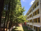 国学 自然,初阳书院主学 龙游初阳小学 中国的巴学园