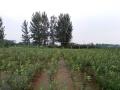 出租转让河东相公26亩沙瓤土地