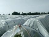 与农户签订合同开辟种植紫薯新篇章
