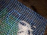 本养殖场出售各种宠物兔,小白兔,肉兔,繁殖种兔,及笼子,兔粮