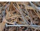 湖南张家界长期回收废钢铁