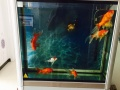80 30 70的鱼缸带鱼 带鱼食 带渔具 600