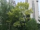大庆路 南湖路梧桐树下精装2房带家电 拎包入住
