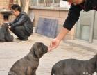 【上门优惠】家养纯种卡斯罗幼犬一窝出售 包健康