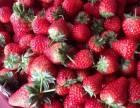 苏州西山玉兴农家乐包吃包住138一位采摘草莓
