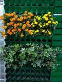 湖南哪里供应的立体绿化植物价格优惠 湖北立体绿化植物