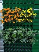 辽宁立体绿化植物|具有口碑的立体绿化植物市场价格情况