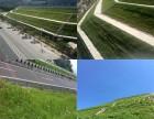 福建厦门CF网植草防护多少钱边坡防护边坡绿化施工