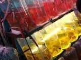魚缸清洗,魚病治療魚缸維護觀賞魚配送,魚缸搬運