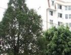 高新区黄土坡附近标准1室1厅澳霖公寓拎包入住
