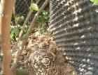 乌龟批发,菜乌龟,几十种乌龟