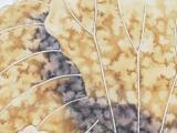近代画家钱维城手绘纸本立轴 双鱼嬉戏 画一张,画工