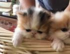 打包出售12只猫咪