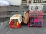 温州24小时上门接宠物 办理航空宠物托运