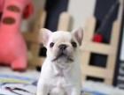 济南出售长期出售纯种法斗纯种法斗幼犬出售高品质法国斗牛犬